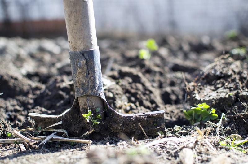 Digging hole for rose