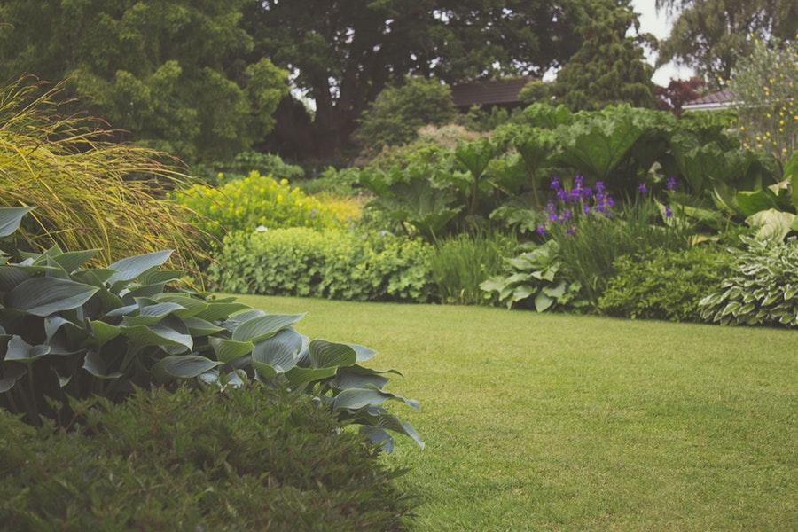 Garden Borders Perennials