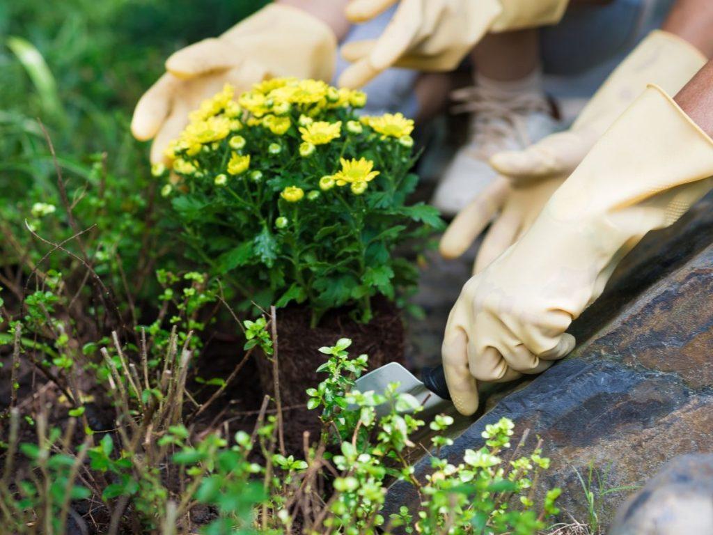 Lifting Perennial