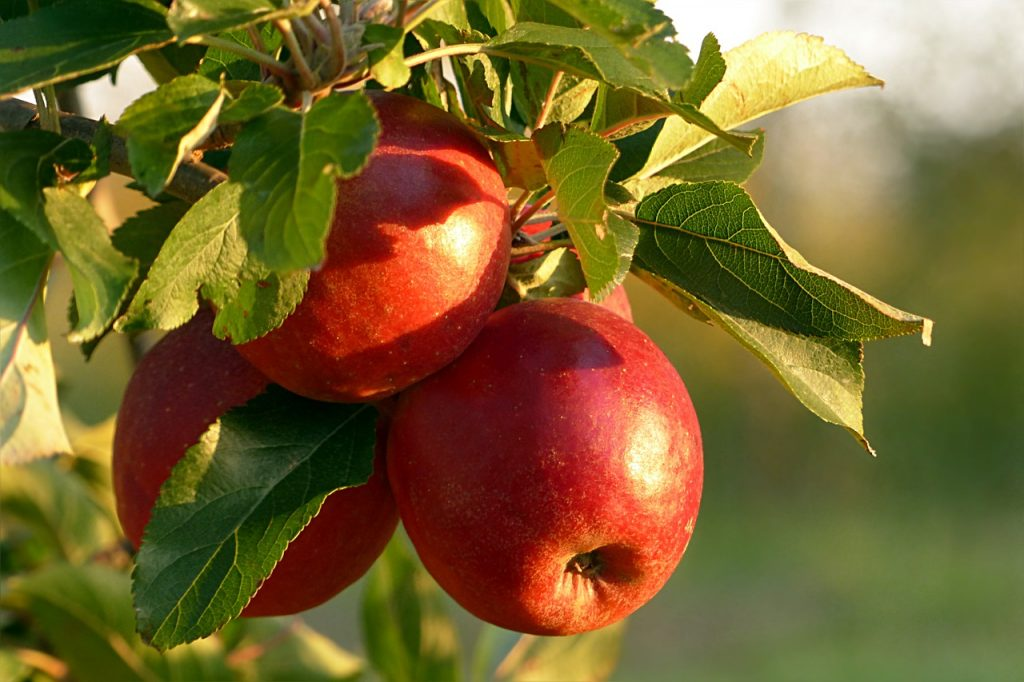 When To Plant Fruit Trees