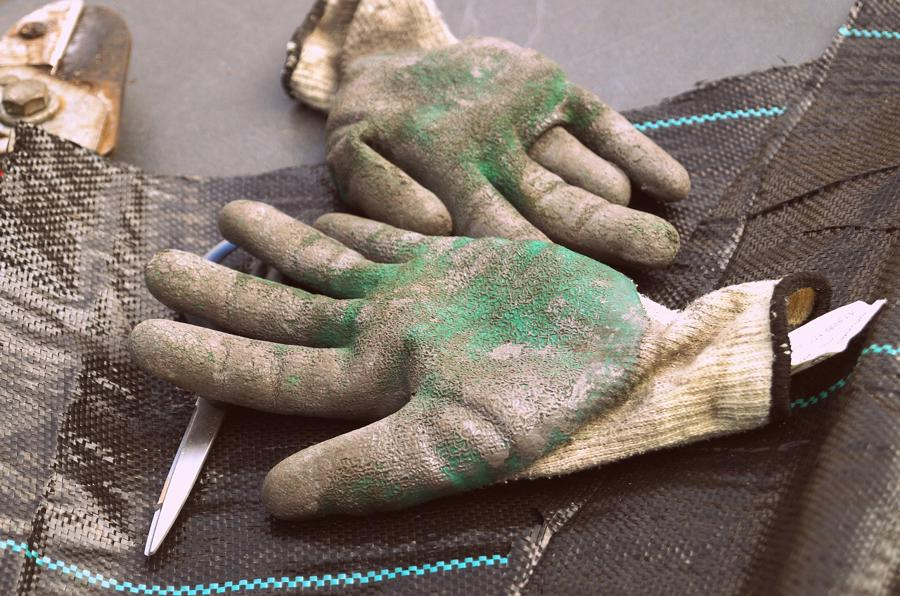 Gloves & Secateurs
