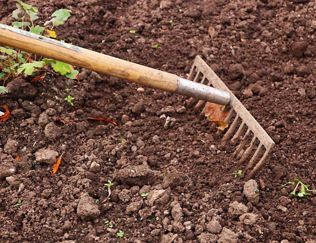 Growing In Clay Soil