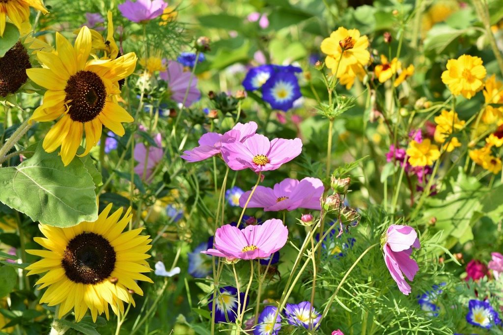 What Are Annual Perennial Biennial Plants How To Plant Your
