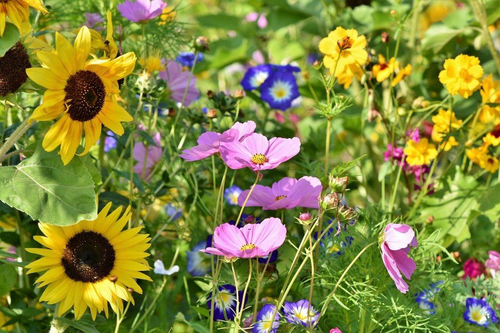 Annual, Perennial & Biennial Plants