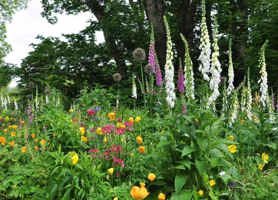 Foxgloves Cottage Garden