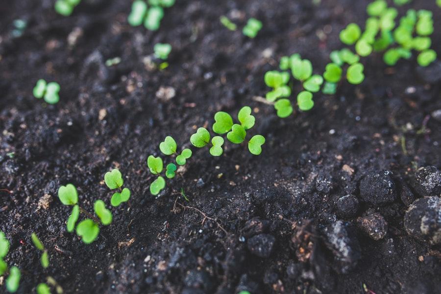Soil for Seedlings