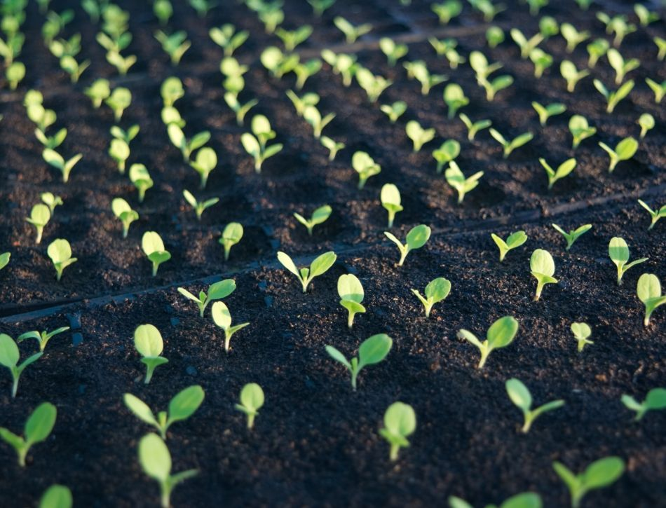 How Long To Stratify Seeds