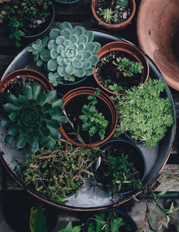 Greenhouse temperature succulents