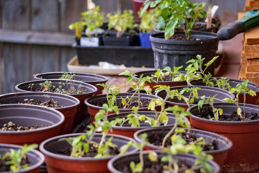 When To Harden Off Plants